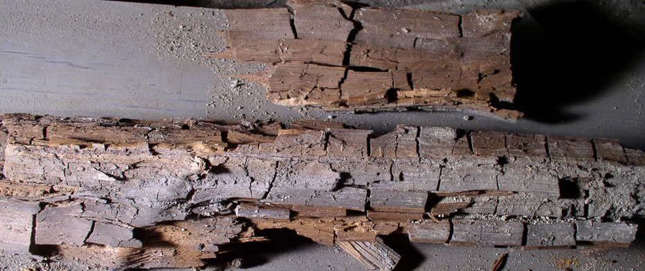 Dry Rot, Wet Rot & Mould